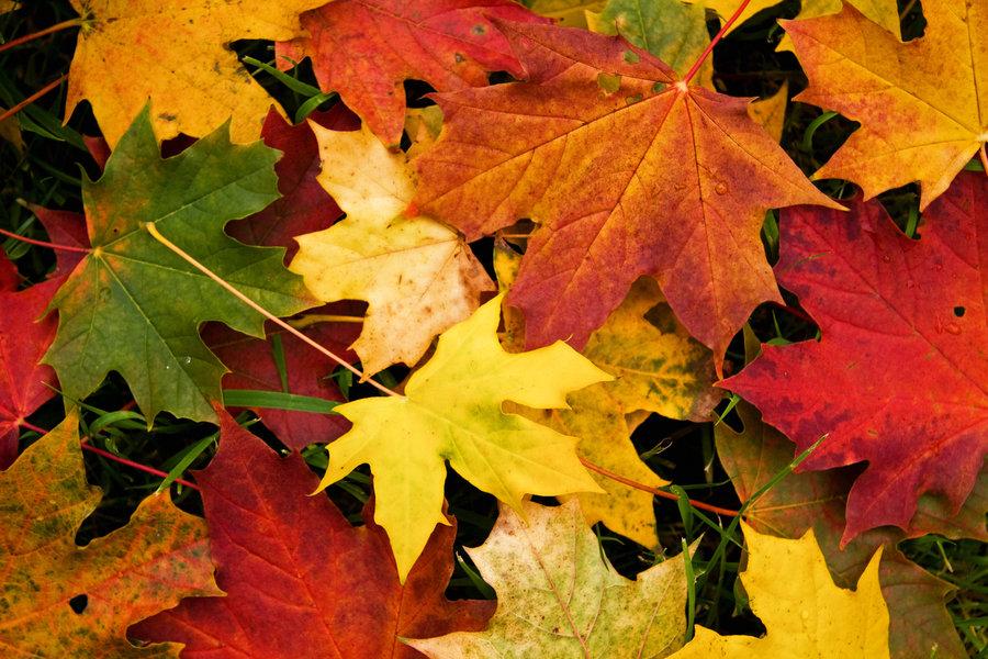 veegmachine voor bladeren